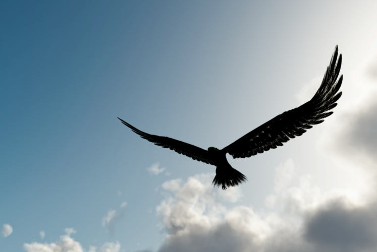eagle above a storm, god gives you wings to soar above the storm