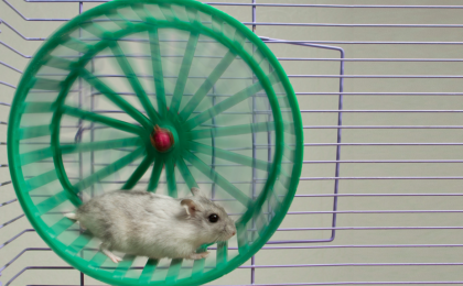 a mind at rest: remedy for the rat race, embrace your destiny, hamster on a wheel